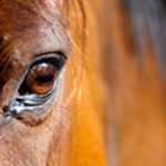 motivalance-hippocoaching-cheval