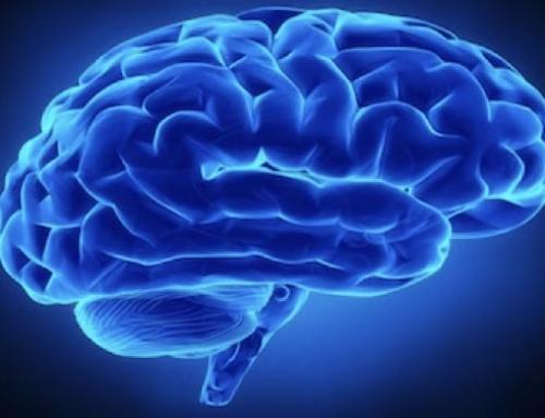 5 principes essentiels issus des neurosciences pour mieux favoriser l'apprentissage en formation